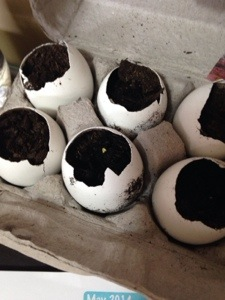 DIY: egg shell planters (4/6)